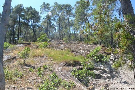 Dalle de grès située à une centaine de mètres de la dalle à empreintes de dinosaures d'Ucel (Ardèche)
