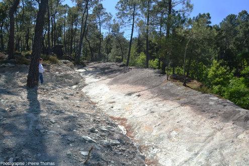 Vue de la partie supérieure de la dalle à empreintes de dinosaures d'Ucel (Ardèche) dans son état de juin 2019
