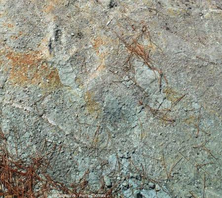 Secteur de la dalle de grès d'Ucel montrant en haut à gauche une empreinte de Coelophysis sp.. et en bas à droite des figures de dessiccation (de qualité assez médiocre)