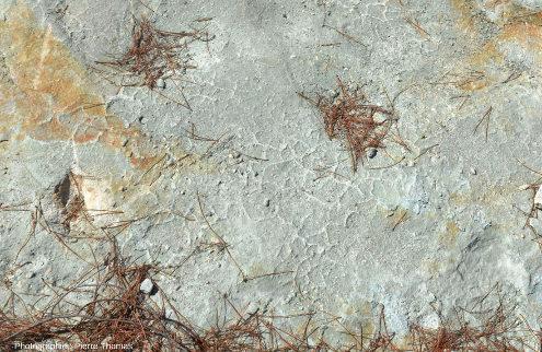 Zoom sur la zone de la dalle précédente montrant les figures de dessiccation, Ucel (Ardèche)