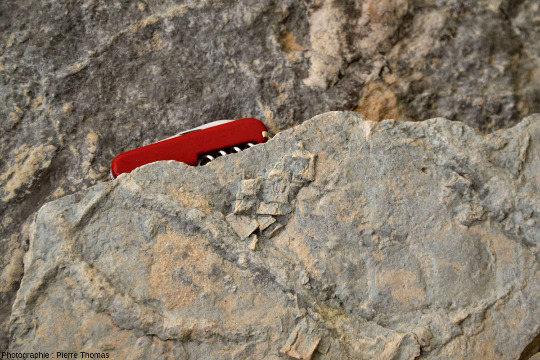 Contre empreinte de trémies de sels (pseudomorphoses) conservées au musée de Payzac (Ardèche)