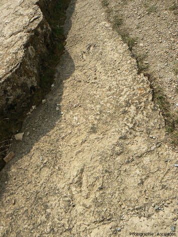 Vue d'ensemble d'une dalle à empreintes de Grallator minusculus au-dessus du village de Saint-Laurent-de-Trèves (Lozère)