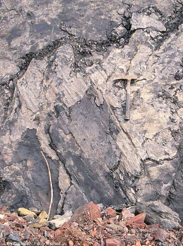 Fossile de tronc d'arbre (sans doute de Calamites) couché à plat à la surface d'une strate quasi-verticale