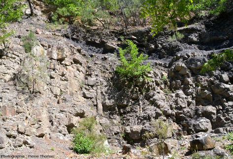 Vue d'ensemble de la paroi où ont été prises les deux photos précédentes, la forêt fossile, Champclauson, La Grand'Combe, Gard