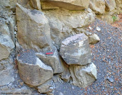 Deux troncs de la forêt fossile facilement accessibles de la tranchée de Champclauson (Gard)