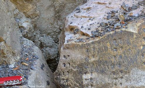 Détail de deux troncs de la forêt fossile facilement accessibles de la tranchée de Champclauson