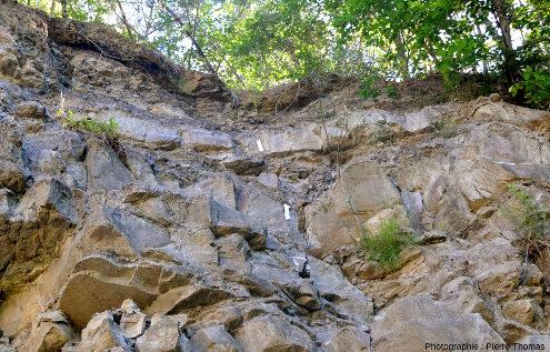 Le seul tronc couché visible dans les 150m de la tranchée, alors qu'il y a des dizaines de troncs verticaux, en position de vie dans la forêt fossile de Champclauson (Gard)