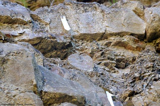 Zoom sur le seul tronc couché visible dans les 150m de la tranchée, alors qu'il y a des dizaines de troncs verticaux, en position de vie dans la forêt fossile de Champclauson