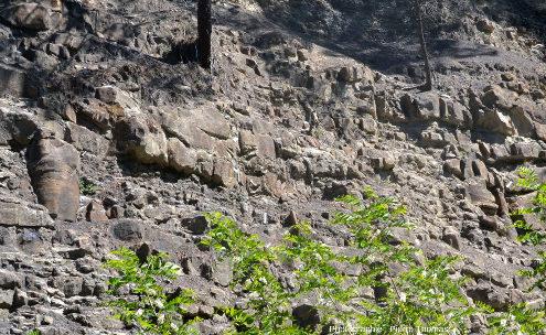 Partie de l'ancien front de taille de Champclauson (Gard) où on peut voir cinq troncs fossiles