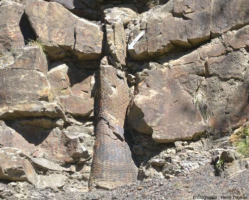 Détail du tronc de sigillaire de la droite de la figure 15, forêt fossile de Champclauson