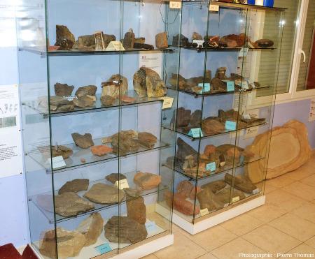 Vitrine à l'intérieur du musée de la forêt fossile exposant roches et fossiles du Stéphanien du secteur d'Alès / La Grand-Combe