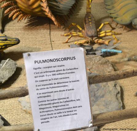 Exemple de légende dénommant le scorpion géant et proposant une explication de la grande taille des arthropodes terrestres du Carbonifère, musée de la forêt fossile de Champclauson (Gard)