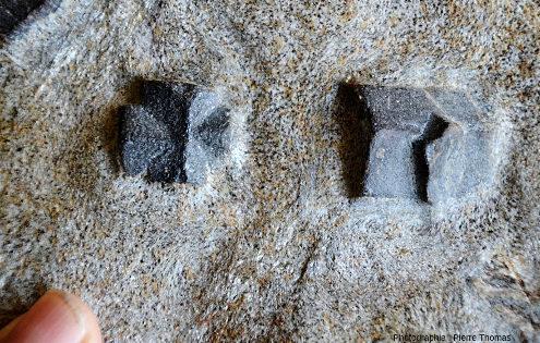 Zoom sur le micaschiste à staurotides avec macle en croix de Malte, dite croisette de Bretagne