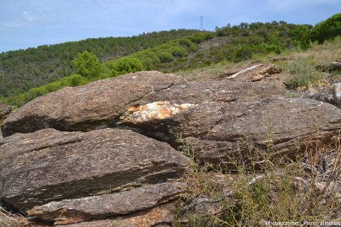 Un affleurement naturel de micaschistes des Maures, commune de la Mole (Var)