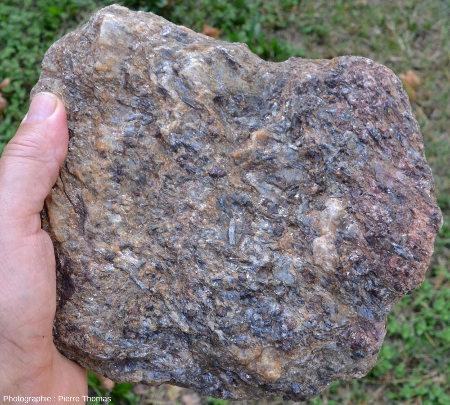 Échantillon de micaschiste des Maures, La Mole (Var)
