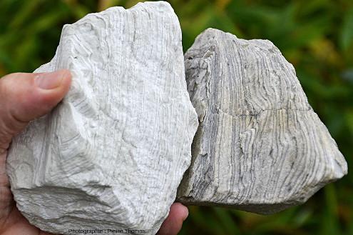 Deux échantillons de diatomites où l'on voit très bien les lamines (varves probables)
