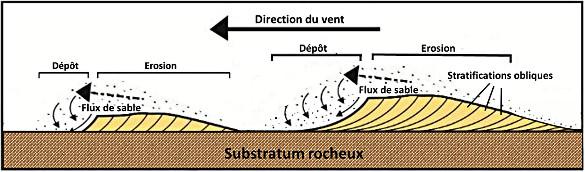 Coupe transversale de deux dunes