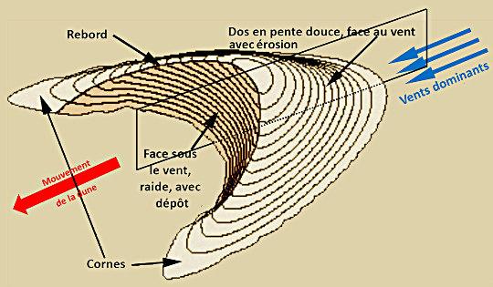 Schéma théorique d'une barkhane
