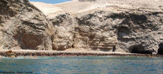 Colonie d'otaries à crinière (Otaria flavescens), iles Ballestas, Pérou