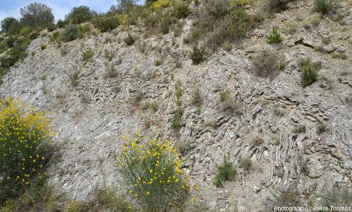 Vue d'ensemble sur des microplis très disharmoniques affectant des gypses oligocènes dans le bassin de l'Èbre, sur le bord de la RN121, 60km au Sud de Pampelune (Navarre, Espagne)