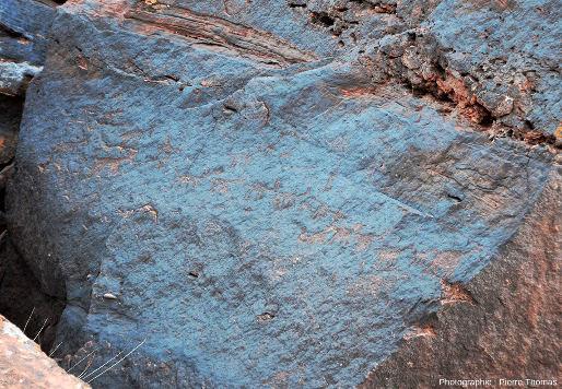 Détail des gravures (pétroglyphes) situées sur la face gauche du gros bloc de la figure précédente, Parc national de Talampaya (Argentine)