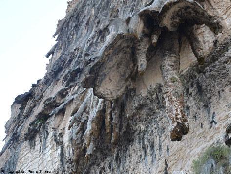 Détail des travertins, stalactites et autres concrétions obliques sur les falaises d'Hasik Park (Oman)