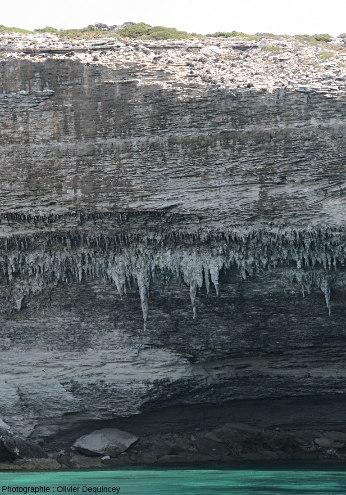 Stalactites pendant des falaises calcaires de Bonifacio