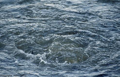 Zoom sur un des remous des eaux de Port en Bessin (Calvados), causé par une résurgence sous-marine ressortant sous pression au fond du port à travers les couches de calcaires du Jurassique moyen