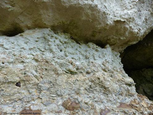 Détail des zones (b), (c) et (d) de l'Oolithe ferrugineuse de Bayeux