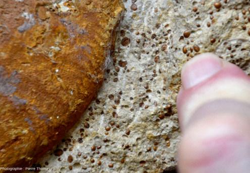 Gros plan sur un échantillon de l'Oolithe ferrugineuse de Bayeux