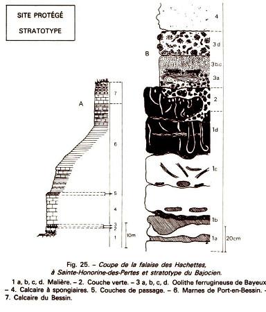 Log stratigraphique synthétique de la falaise de Sainte-Honorine-des-Pertes (Port-en-Bessin, Calvados)