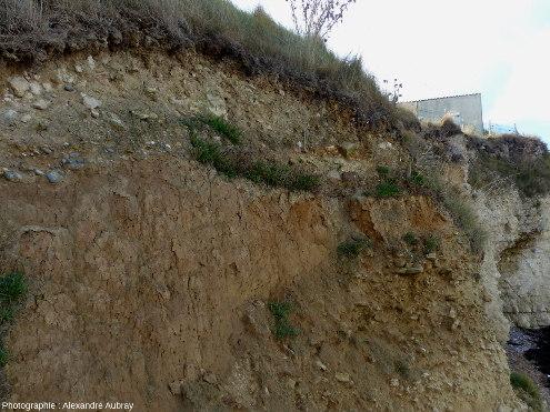 Détail du head du sommet de la falaise de Sainte-Honorine-des-Pertes
