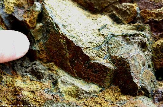 Détail de l'ammonite montrant les lignes de suture persillées