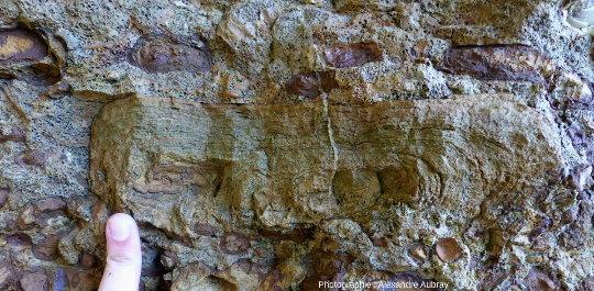 Détail d'un niveau stromatolithique