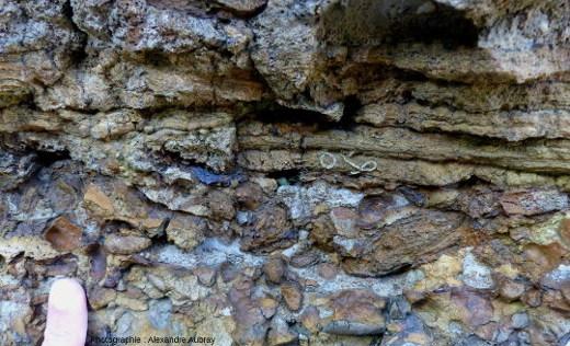 Détail des lamines stromatolithiques