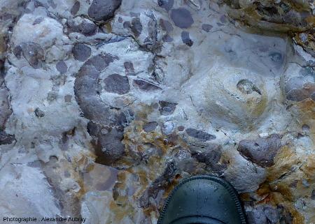 Ammonites visibles dans la formation de la Malière