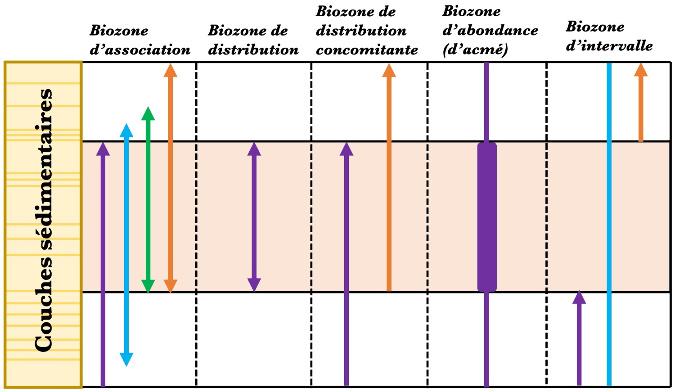 Quelques exemples de types de biozones