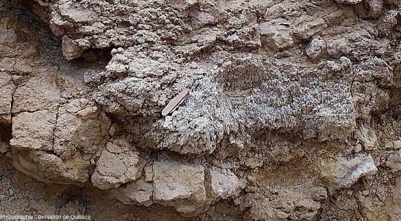 Zoom sur la superposition calcaire récifal / calcaire concrétionné / calcaire marneux