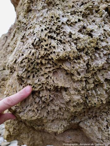 Une masse de calcaire récifal, Pointe du Chay (Charente-Maritime)