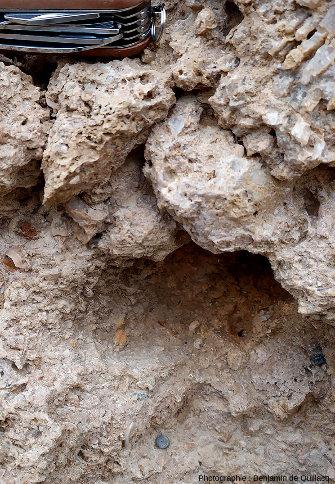 Zoom arrière sur l'article de crinoïde (visible au centre de la moitié inférieure de l'image) de la photo précédente