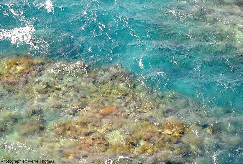 Zoom sur les récifs isolés au sein du quasi-lagon de Moore Reef
