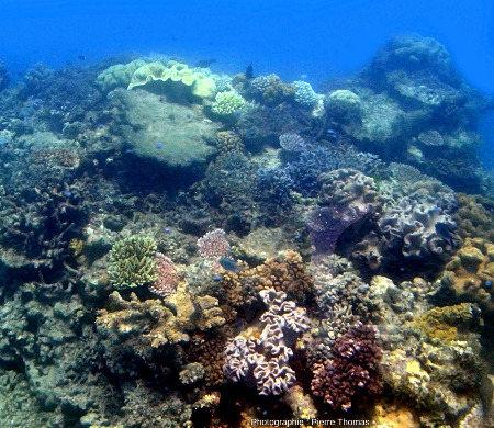 Paysage sous-marin caractéristique de la Grande Barrière de Corail autour de Moore Reef, au large de la ville de Cairn (Queensland, Australie)