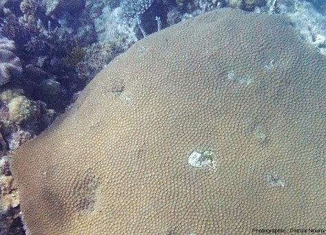 Zoom sur un corail tabulaire