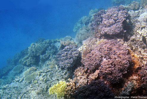 Vue de profil sur une pente reliant une zone à faible profondeur et une zone plus profonde