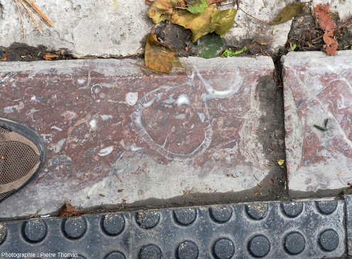 Vue plus éloignée de la bordure de trottoir de la figure précédente