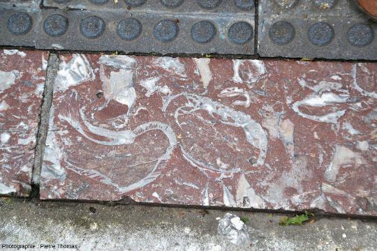 Bordure de trottoir à rudistes, Saint-Sébastien, Pays basque espagnol