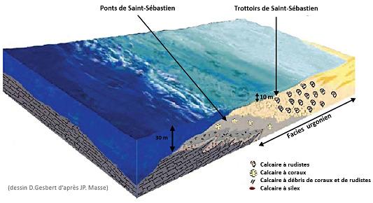 Reconstitution du milieu de sédimentation des calcaires urgoniens