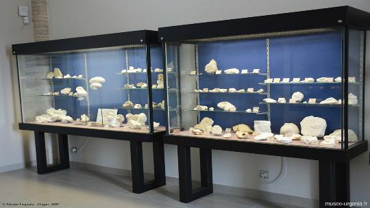 Une vitrine de fossile de l'Urgonien d'Orgon au Musée Urgonia