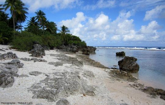 Patates coralliennes fossiles (âge quaternaire) émergées, atoll de Tikehau, Polynésie française