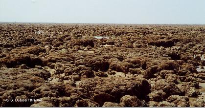 Une partie du banc d'hermelles de Cherrueix (site de Sainte-Anne), au Sud de baie du Mont-Saint-Michel
